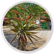 Aloe Plant In Kruger National Park-south Africa Round Beach Towel