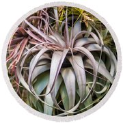 Aloe Vera Cactus Succulent Plant Indoor In Summer Round Beach Towel