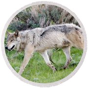 Alpha Wolf On The Move Round Beach Towel