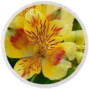 Alstroemerias Flower 1 Round Beach Towel