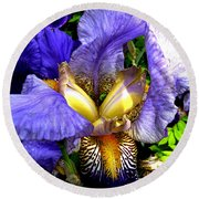 Amazing Iris Round Beach Towel
