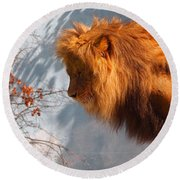 Amazing Male Lion Round Beach Towel