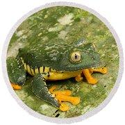 Amazon Leaf Frog Round Beach Towel