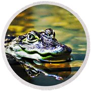 American Alligator 1 Round Beach Towel