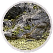 American Alligator Print Round Beach Towel