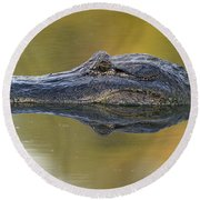American Alligator Reflection Round Beach Towel