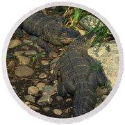 American Alligators Round Beach Towel