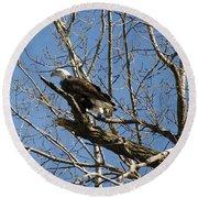 American Bald Eagle In Illinois Round Beach Towel