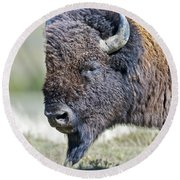 American Bison Closeup Round Beach Towel