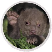 American Black Bear Cub Wildlife Rescue Round Beach Towel
