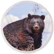 American Black Bear Round Beach Towel