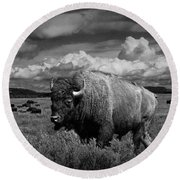 American Buffalo Or Bison In The Grand Teton National Park Round Beach Towel