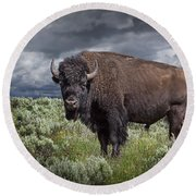 American Buffalo Or Bison In Yellowstone Round Beach Towel