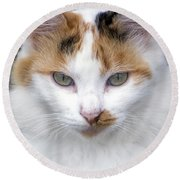 American Calico Cat Portrait Round Beach Towel