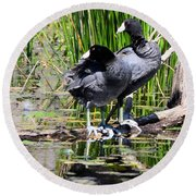 American Coot 1 Round Beach Towel
