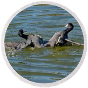 American Coots Fighting Round Beach Towel