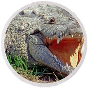 American Crocodile Round Beach Towel