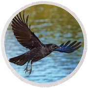 American Crow Flying Over Water Round Beach Towel