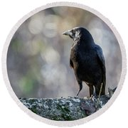 American Crow Square Round Beach Towel