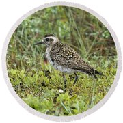 American Golden Plover Round Beach Towel