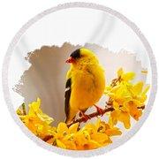 American Goldfinch Branch Of Forsythia Round Beach Towel