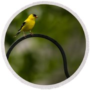 American Goldfinch Perched On A Shepherds Hook Round Beach Towel