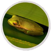American Green Tree Frog I Mlo Round Beach Towel