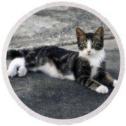 American Grey Tiger Stripe Kitten Portrait Round Beach Towel