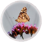 American Painted Lady Butterfly White Square Round Beach Towel