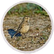 American Pipit Round Beach Towel