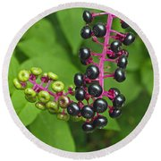 American Pokeweed  Round Beach Towel