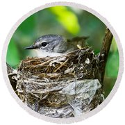 American Redstart Nest Round Beach Towel