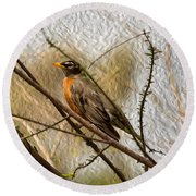 American Robin On A Branch Round Beach Towel