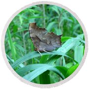 American Snout Butterfly Round Beach Towel