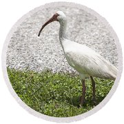 American White Ibis Poster Look Round Beach Towel