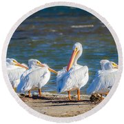 American White Pelicans Round Beach Towel