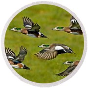 American Wigeon Drakes Round Beach Towel