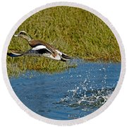 American Wigeon Taking Off Round Beach Towel