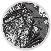 Amidst The Pines Is The Barrens Round Beach Towel