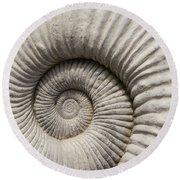 Ammonites Fossil Shell Round Beach Towel