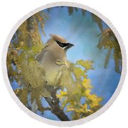 Among The Catkins Round Beach Towel
