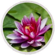 Among The Lily Pads Round Beach Towel