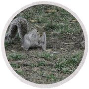 Gray Squirrel Among The Pine Cones Round Beach Towel
