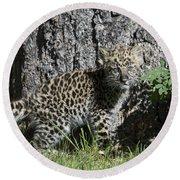 Amur Leopard Cub Antics Round Beach Towel