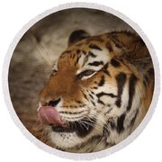 Amur Tiger 3 Round Beach Towel