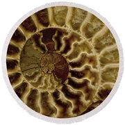 An Ancient Ammonite Pattern Iv Round Beach Towel