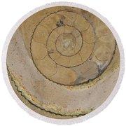 An Ancient Ammonite Pattern Vi Round Beach Towel