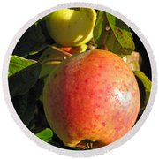 An Apple After Frost Round Beach Towel