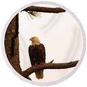 An Eagle Day Dreaming Round Beach Towel