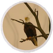 An Eagle In An Old Snag Round Beach Towel